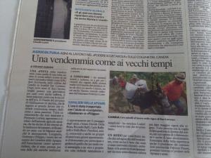 """"""" UNA VENDEMMIA COME AI VECCHI TEMPI """""""